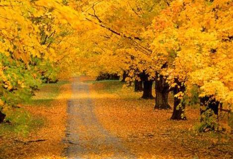 Осенний стриптиз